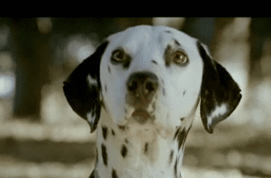 Which Clydesdale and Dalmatian Commercial's Cuter?