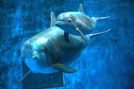 Pictures of Baby Dolphin Named on Facebook
