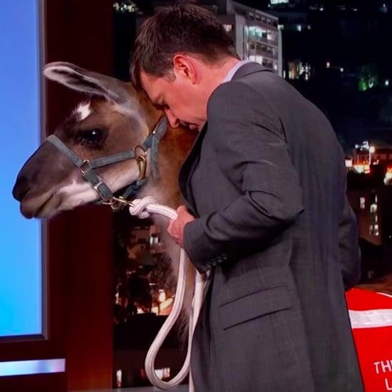 Ed Helms Brings a Llama to Jimmy Kimmel Live