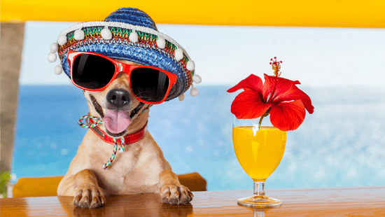 These Adorable Dogs Of Instagram Are Celebrating Cinco De Mayo