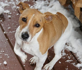 Weirdest Dog Insurance Claims