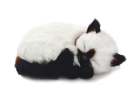 Perfect Petzzz: Siamese Cat