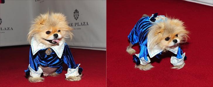 Lisa Vanderpump's Pup, Giggy, Rules the Red Carpet