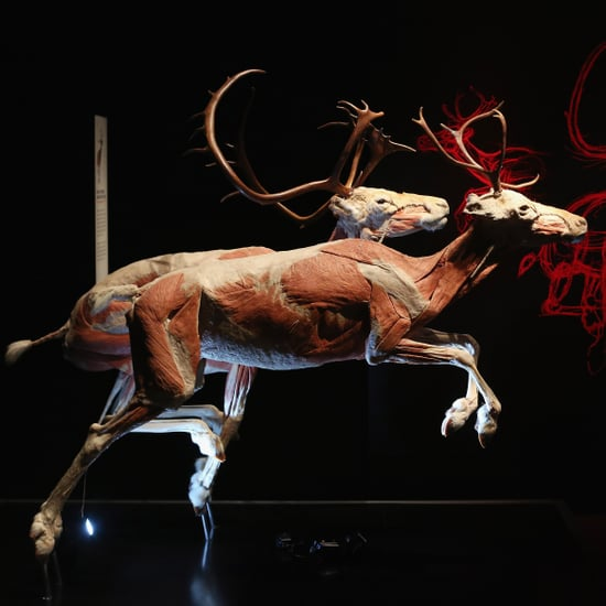 Animals Inside Out Exhibit Shows Muscular and Circulatory Systems