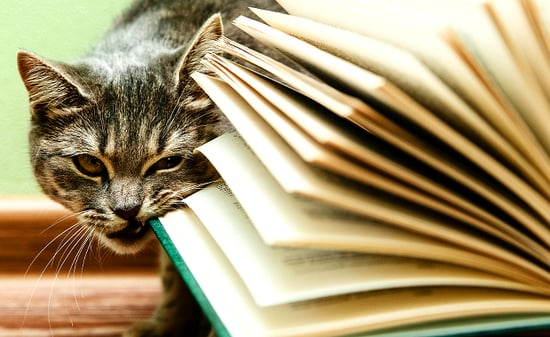 5 Reasons It's Impossible to Read When My Cats Are Nearby