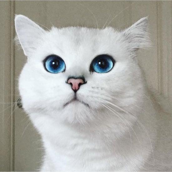 Celebrity Cats on Instagram