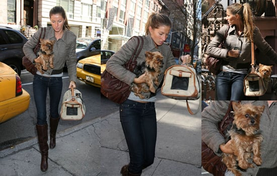 Gisele Bundchen and Tom Brady in New York with Cute Puppy in Tow