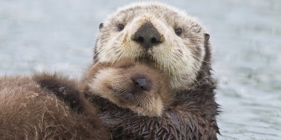 Watch Heroic Rescuers Reunite Crying Otter Pup With Mom