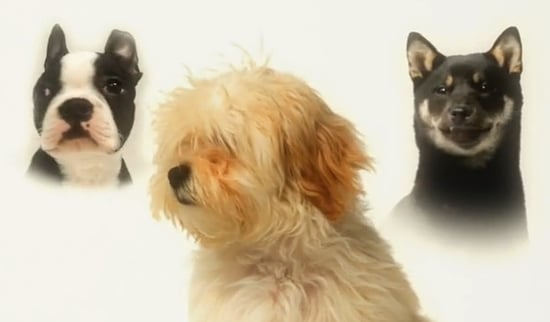 Stride Gum Puppies Commercial For Chewing Gum