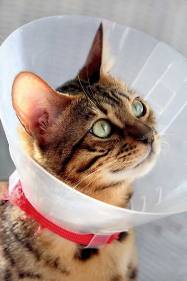 Health Talk: Cone of Shame Precludes Need for Barf Bags