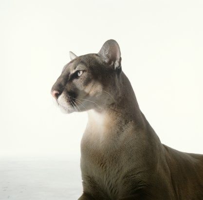 Do You Find the Cougar Concept Offensive?