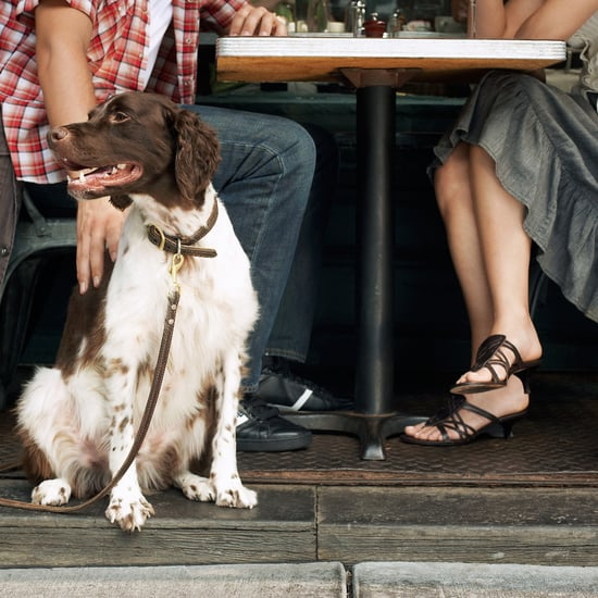 Dining Out With Your Dog