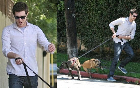Adam Brody: Part-Time Dog Walker