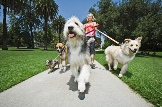 Do Your Dogs Walk Solo or Part of a Pack?