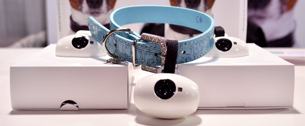 5 Awesome Pet Gadgets That Will Make Them Love You Even More