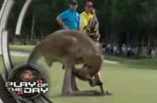 Kangaroo Masturbates During Golf Game
