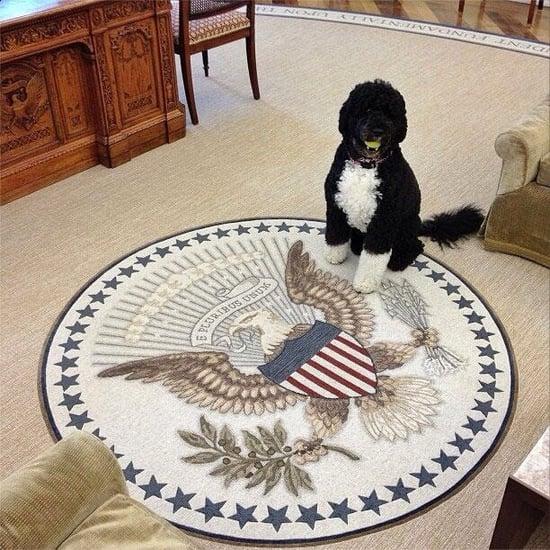Bo Obama Instagram Picture