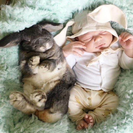 Baby and His Pet Bunnies
