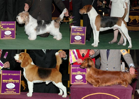 2008 Westminster Winners: Hound Group