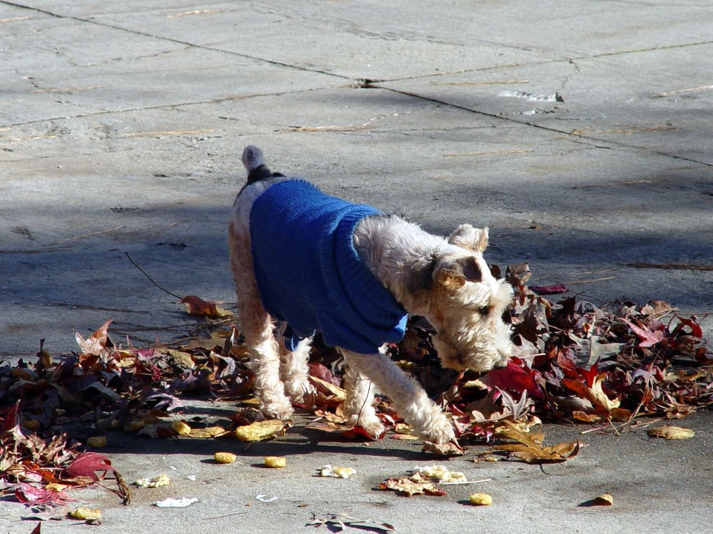 Even city dogs can join in the leafy fun! Source: Flickr user Clevergrrl