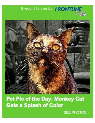 Have You Submitted Your Adorable Pet Photos Yet?!