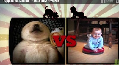 """Puppies vs. Babies"": The Battle for Cuteness Moves to TV (VIDEO)"