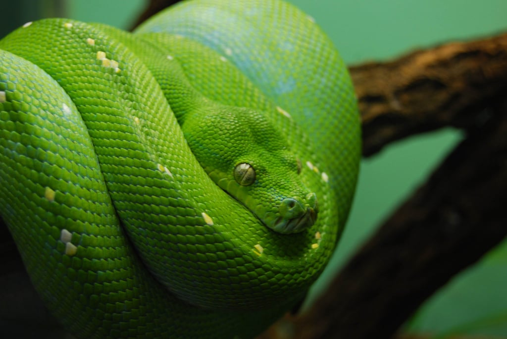 Snakes rely on the heat from the sun to control their body temperatures, which explains why most are found in warm climates. And snakes are shy creatures that prefer to keep to themselves. Source: Flickr user LongitudeLatitude