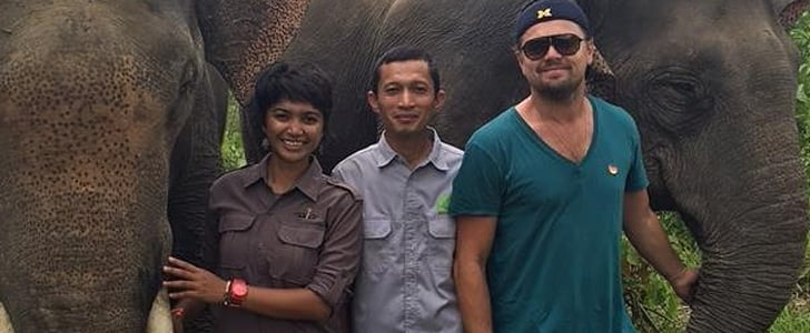 1 Very Lucky Elephant Got to Grab Leonardo DiCaprio's Trousers