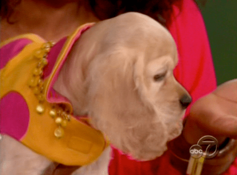 Oprah Winfrey's New Dog Sadie, a Cocker Spaniel