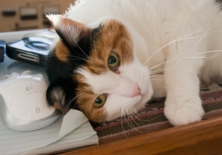 Gesundheit! What to Do When Your Cat Is a Sneezer