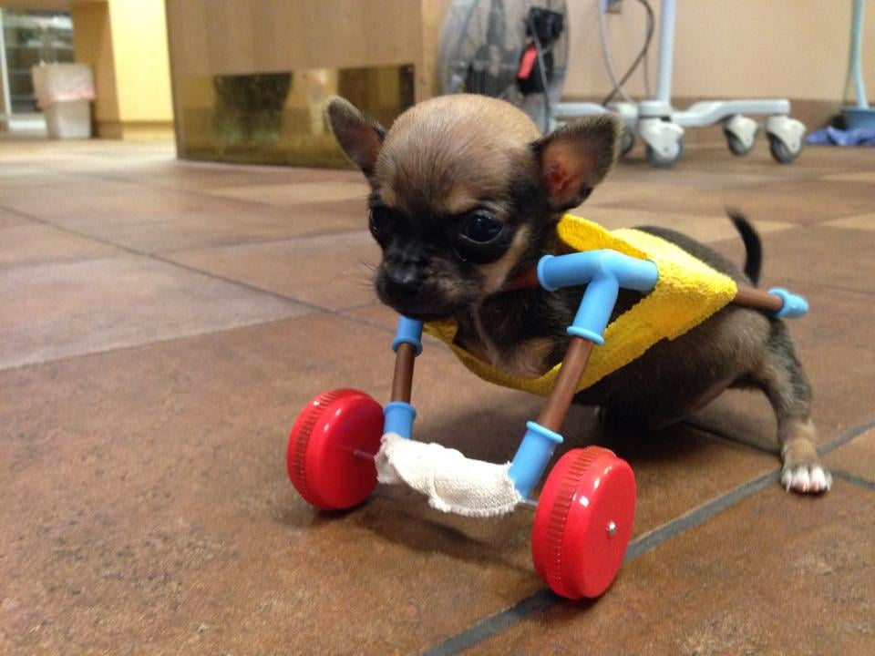 This was one of the early cart options TurboRoo tested at The Downtown Veterinarian.  Source: Facebook user The Downtown Veterinarian