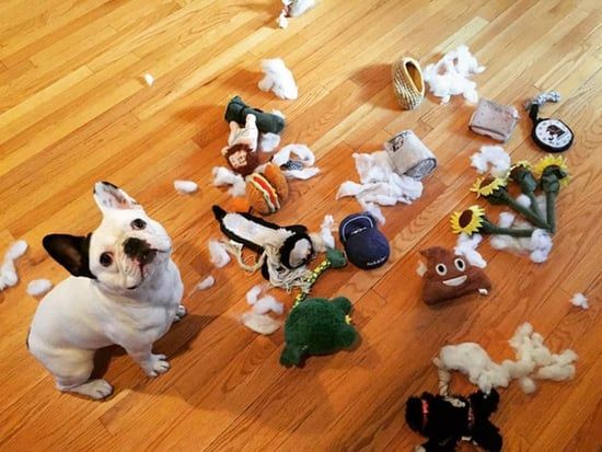 Dogs Channel Their Destructive and Silly Side in Honor of National Dog Day