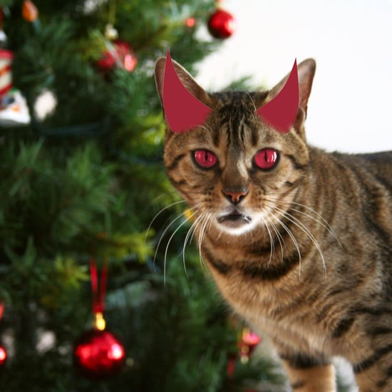 Cats Attack Christmas Trees