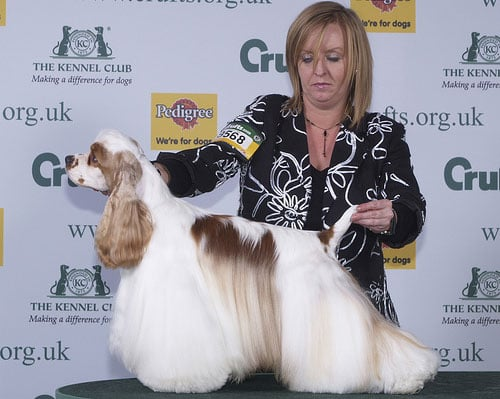 Super Cute Crufts Gallery!