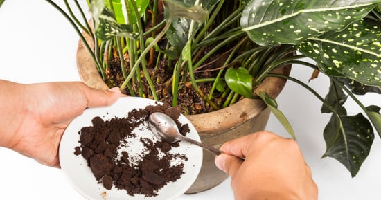 8 Genius Ways To Use Old Coffee Grounds
