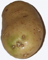 What's the Deal with Green Potatoes