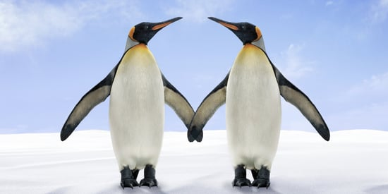 Same-Sex Penguin Couple Gets The Chance To Build A Life Together
