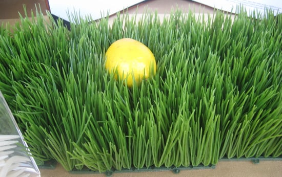 Easy Spring Centerpiece: Wheatgrass
