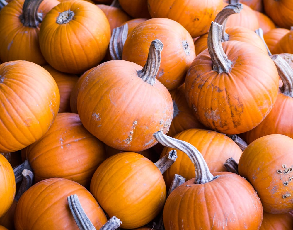 The Fall Food: Pumpkins