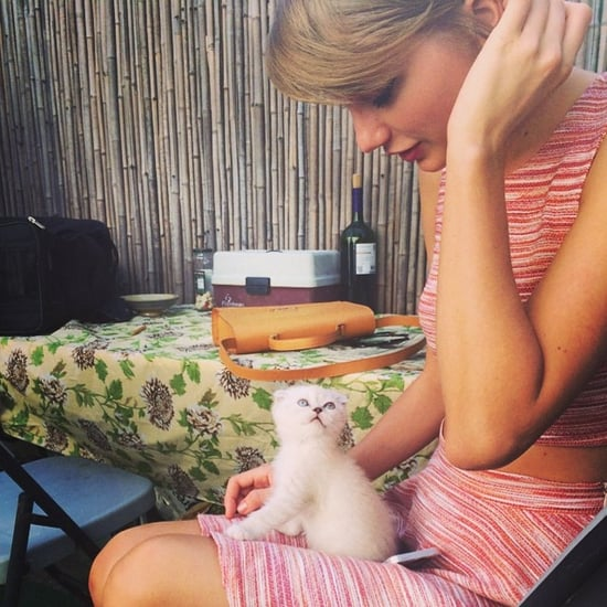 Pictures of Taylor Swift's Cats