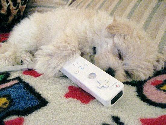 Caption This - Wii Puppii
