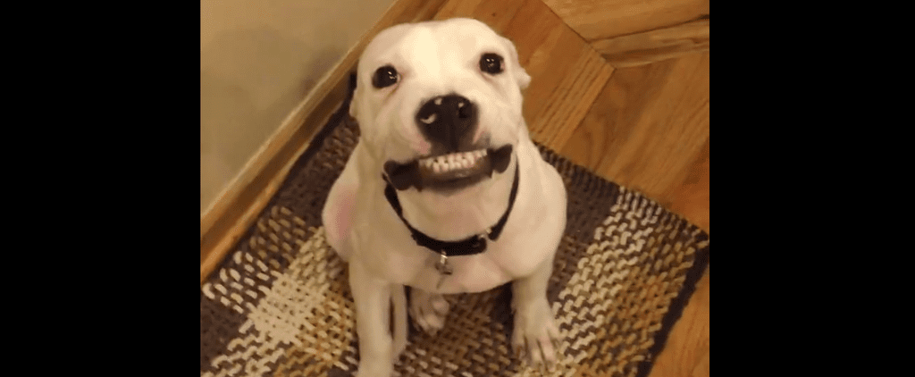 Learn a Thing or Two From This Dog That Can Totally Smile on Command