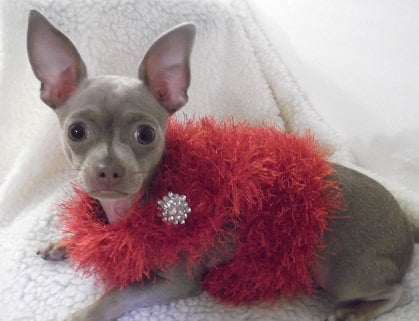 Is your pup a drama queen? Channel her inner Joan Collins with this fuzzy boa harness.