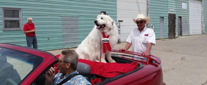 Pack It All Up, We're Moving to This Town Where a Dog Is Mayor