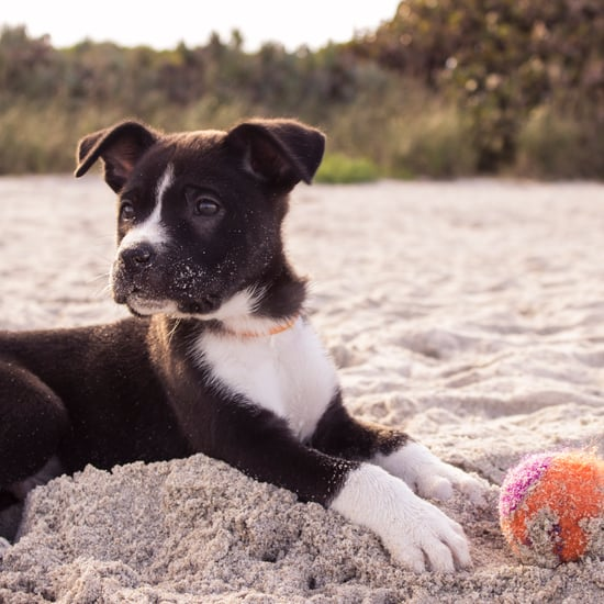 Travel Tips For Dogs