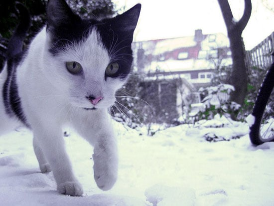 The freezing ground doesn't seem to faze this inquisitive kitty.  Source: Flickr user Cats in trees