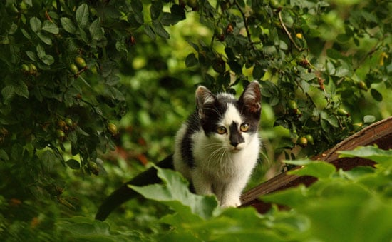 It's Feral Cat Day —Have You Ever Seen One?