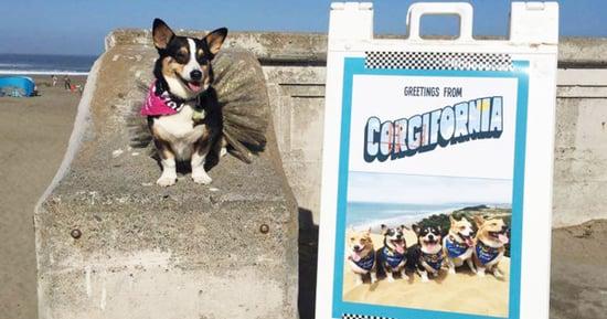 Hundreds of Corgis Take Over San Francisco Beach for Corgi Con 2016