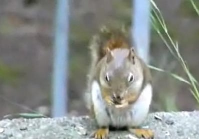 Cute Alert: Squirrel Has Hiccups