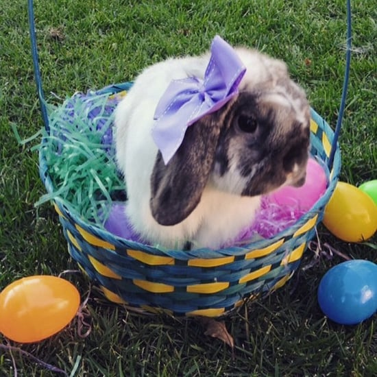 Fun Facts About Easter's Fuzziest Figure